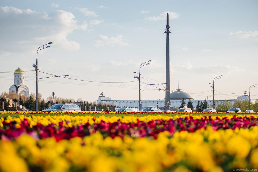 Зачем Москве цветы?